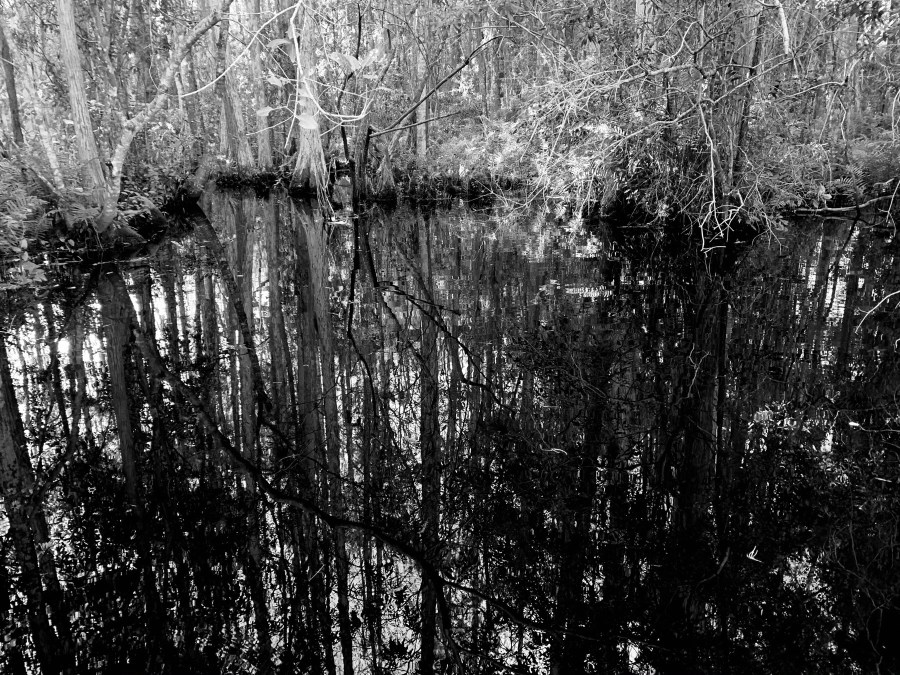 trees reflection in water