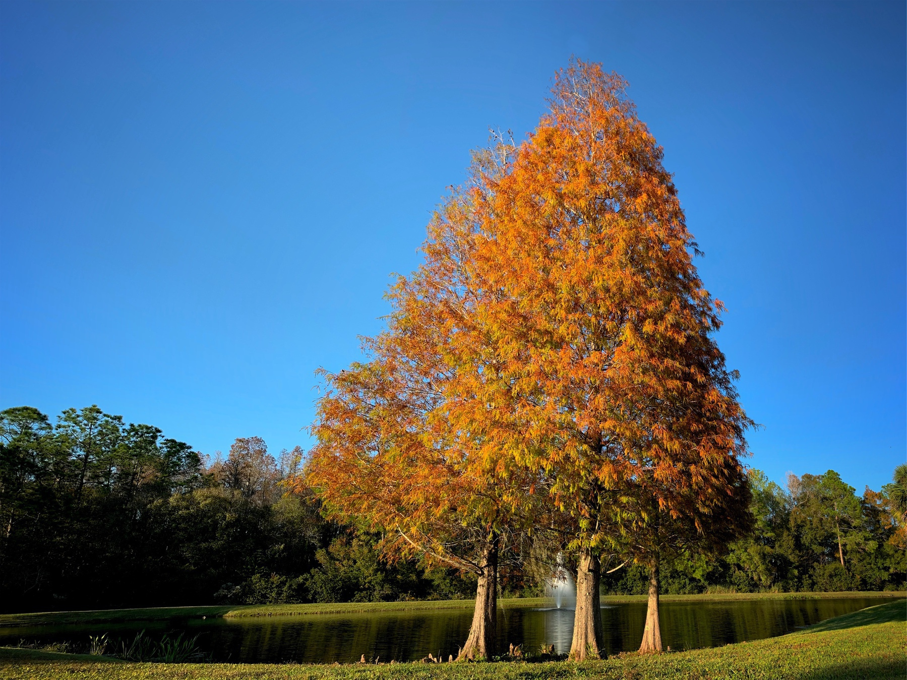 trees with orange leaves in front of small lake